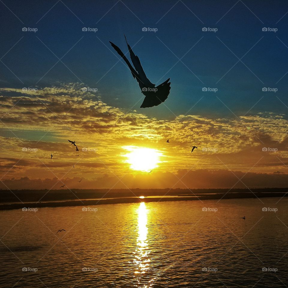 Silhouette of bird flying over the sea during sunset