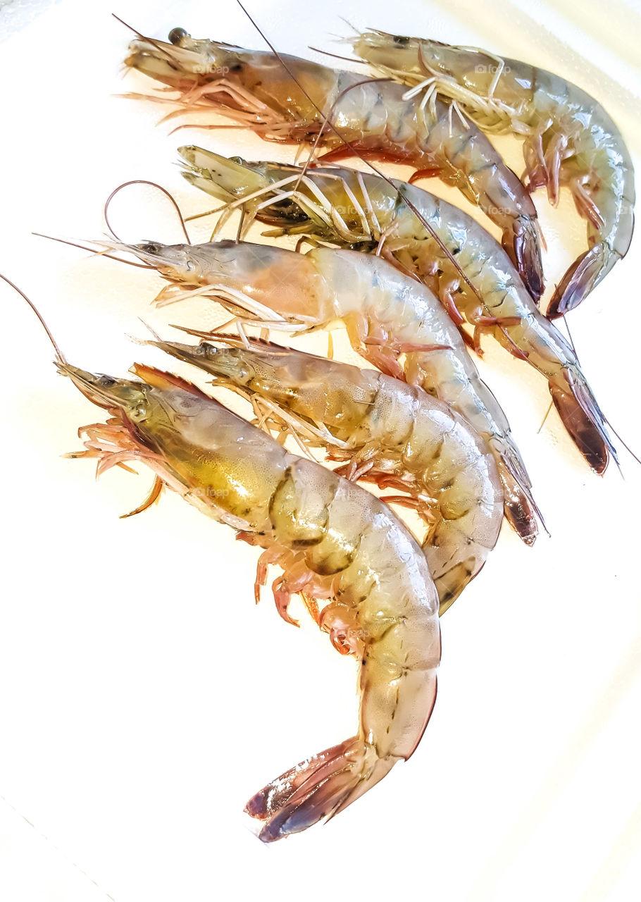 fresh raw gulf coast shrimp