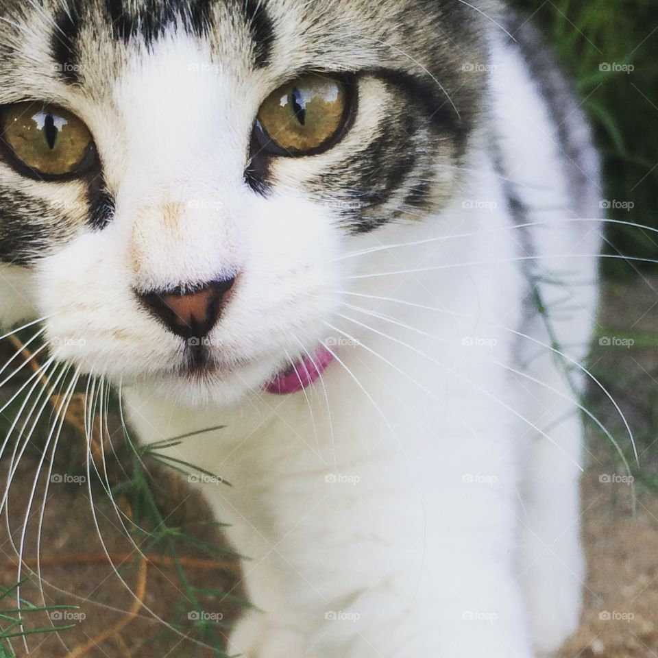Pretty Kitty. We love our animals and especially love cats. We enjoy capturing their playful nature and beauty.