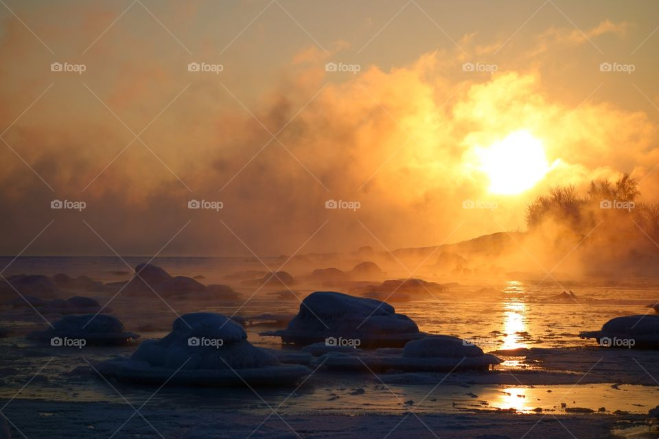 Swans in last open water in extremely cold and misty morning with sea smoke from the Baltic Sea at sunrise time in Helsinki, Finland.