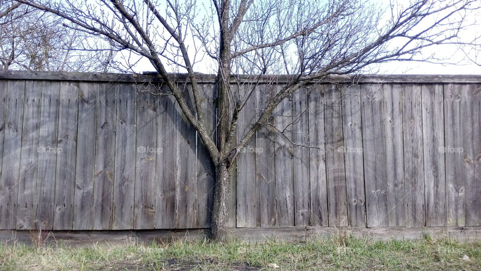 tree against a gray fence