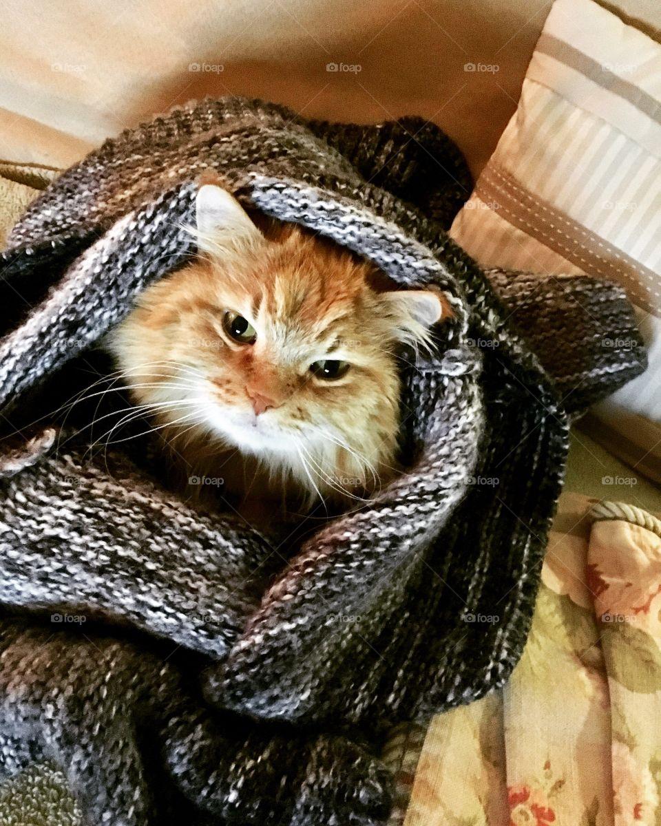Baby Leo keeping warm in a wool sweater