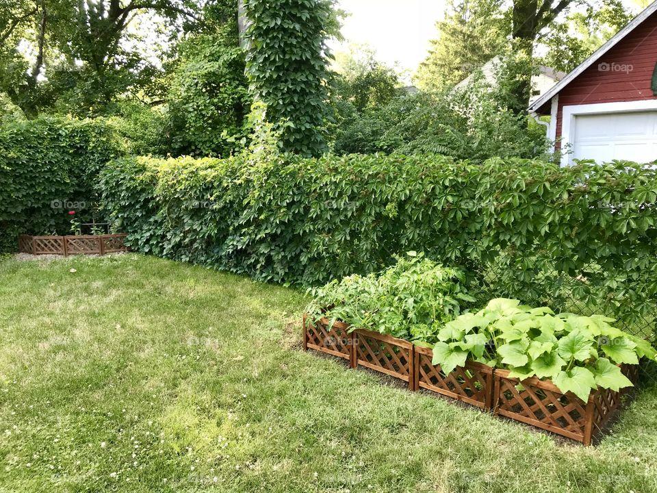 Garden growing green in Ohio