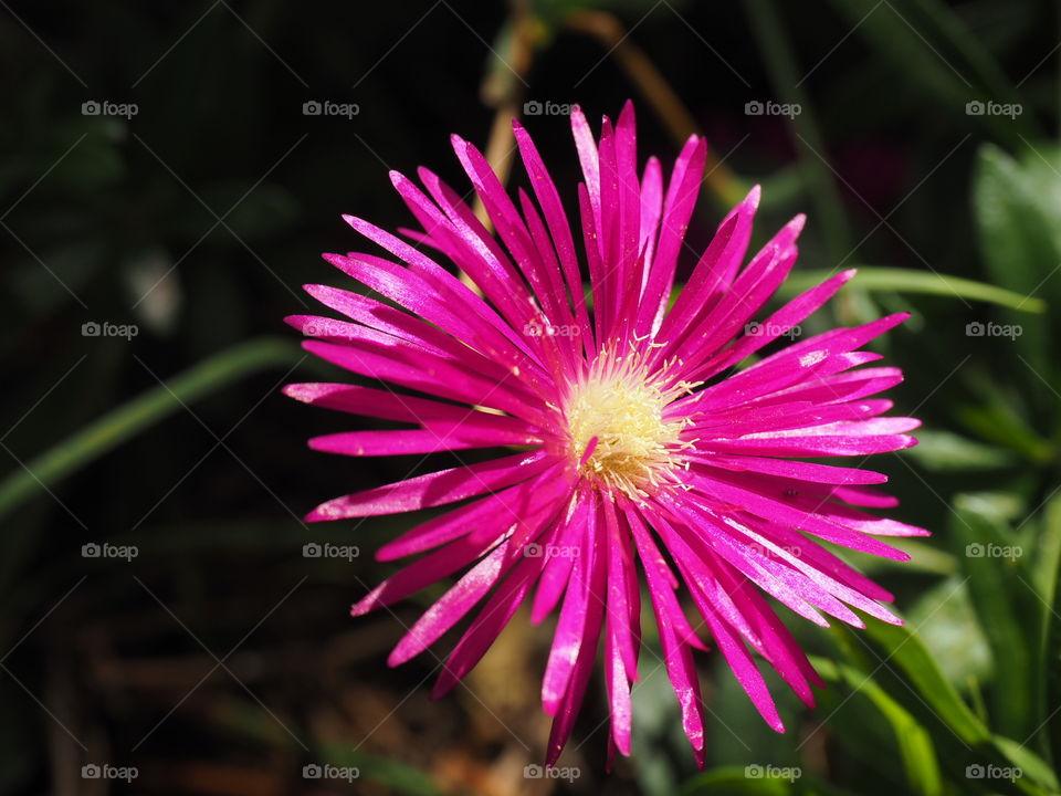Flowers,macro, nature