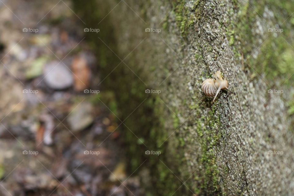 Snail in forest / closeup