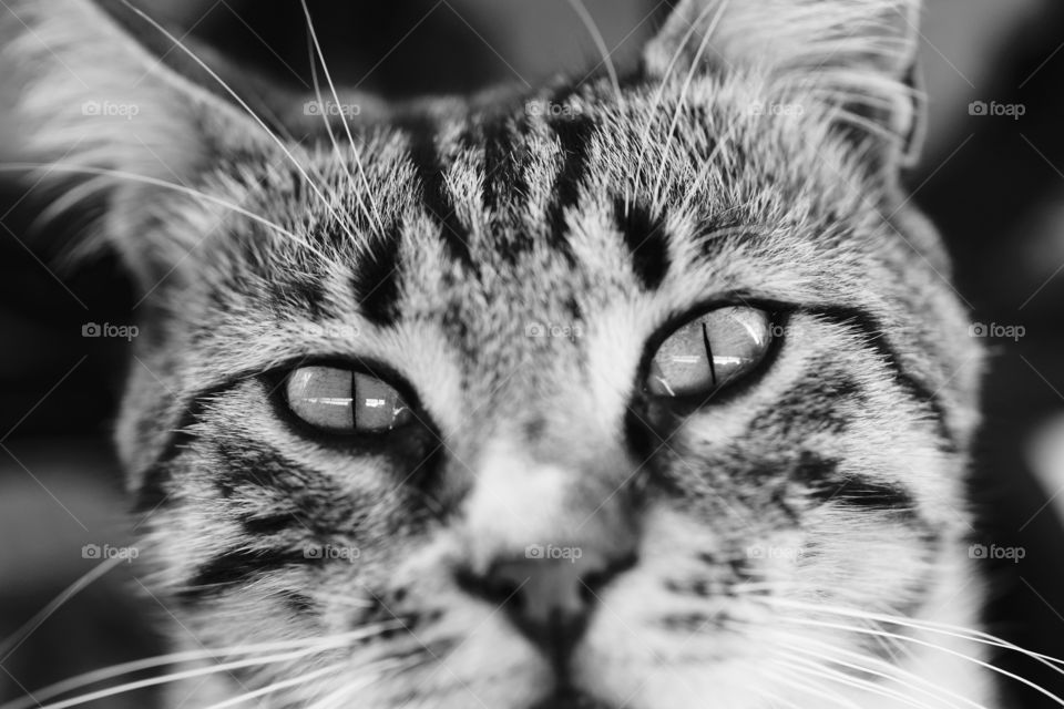 sweet cat with expressive eyes minister