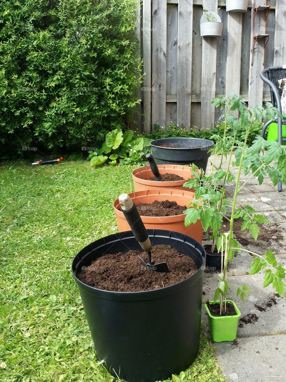 Gardening - Planting tomatoes