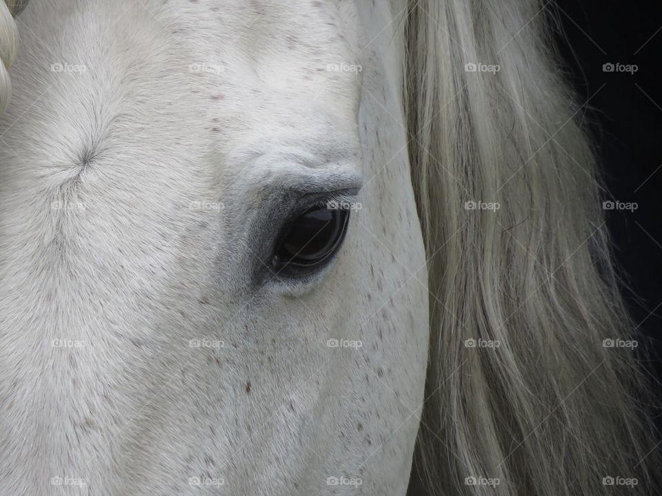 Close-up of white horse eye
