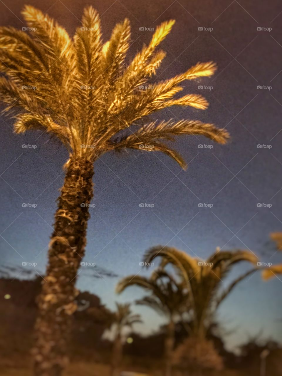 Palm trees evening view