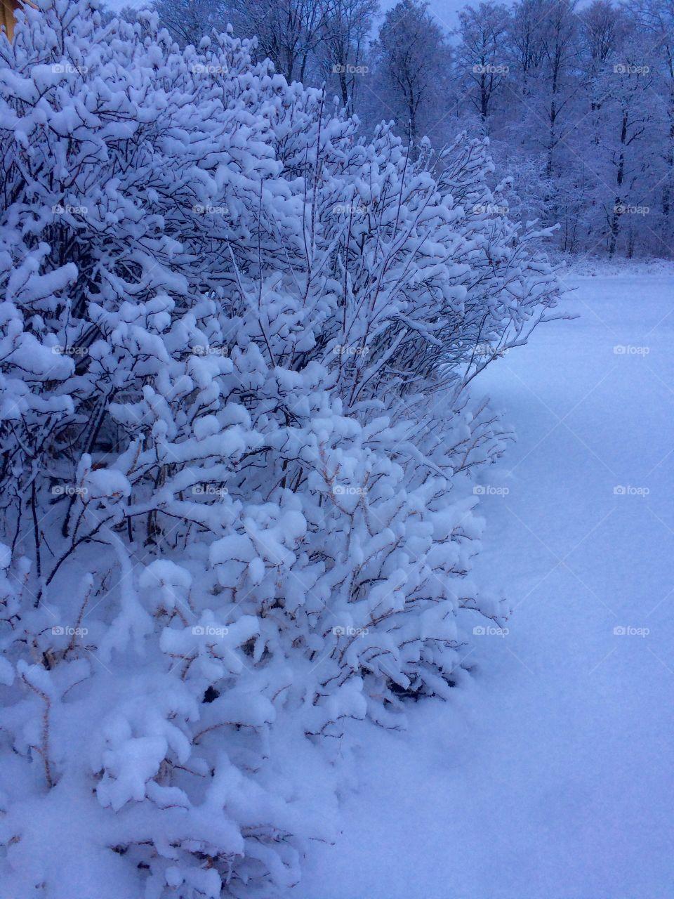 Snow winter cool
