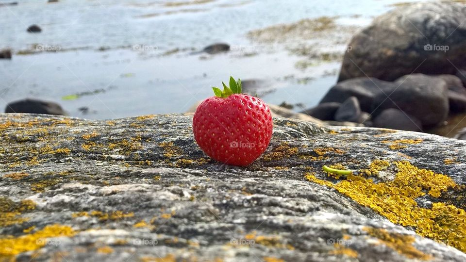 A single strawberry . Summertime and a single strawberry on the rocks with the ocean behind