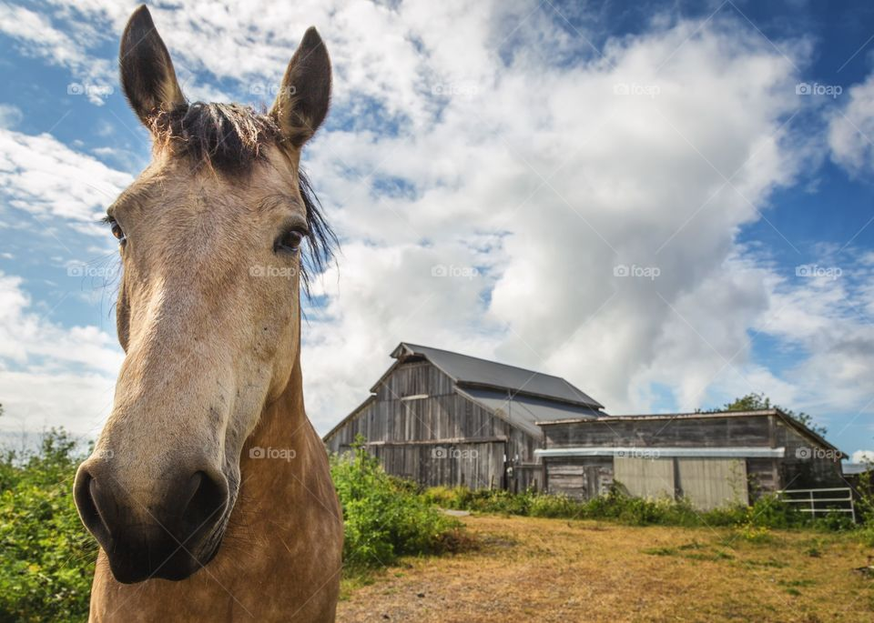 Portrait of a horse and abandoned house