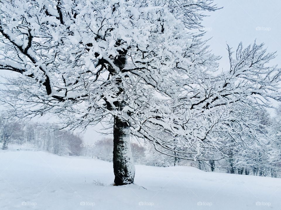 Single tree covered in snow
