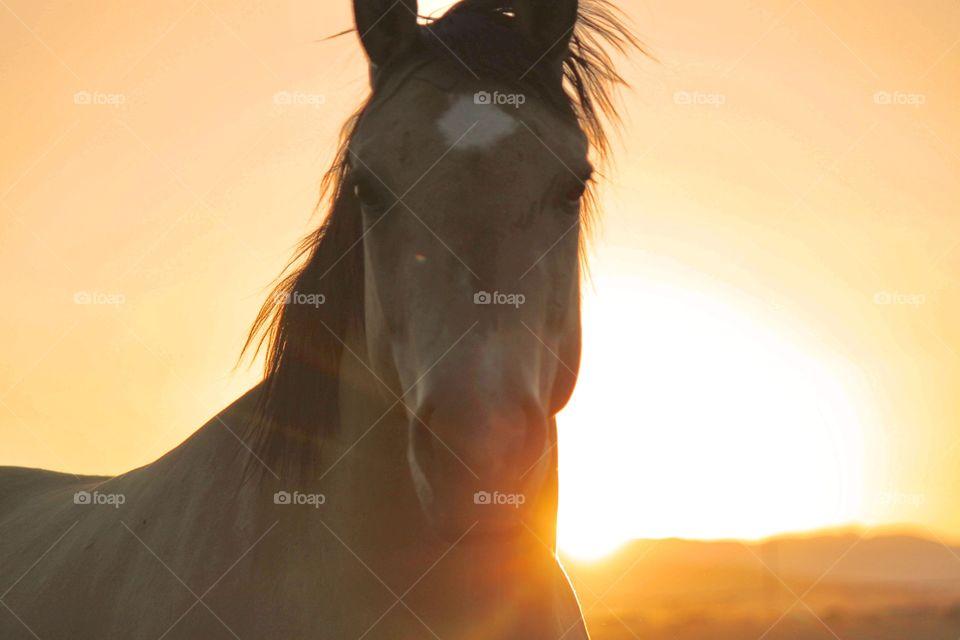 Portrait of a stallion
