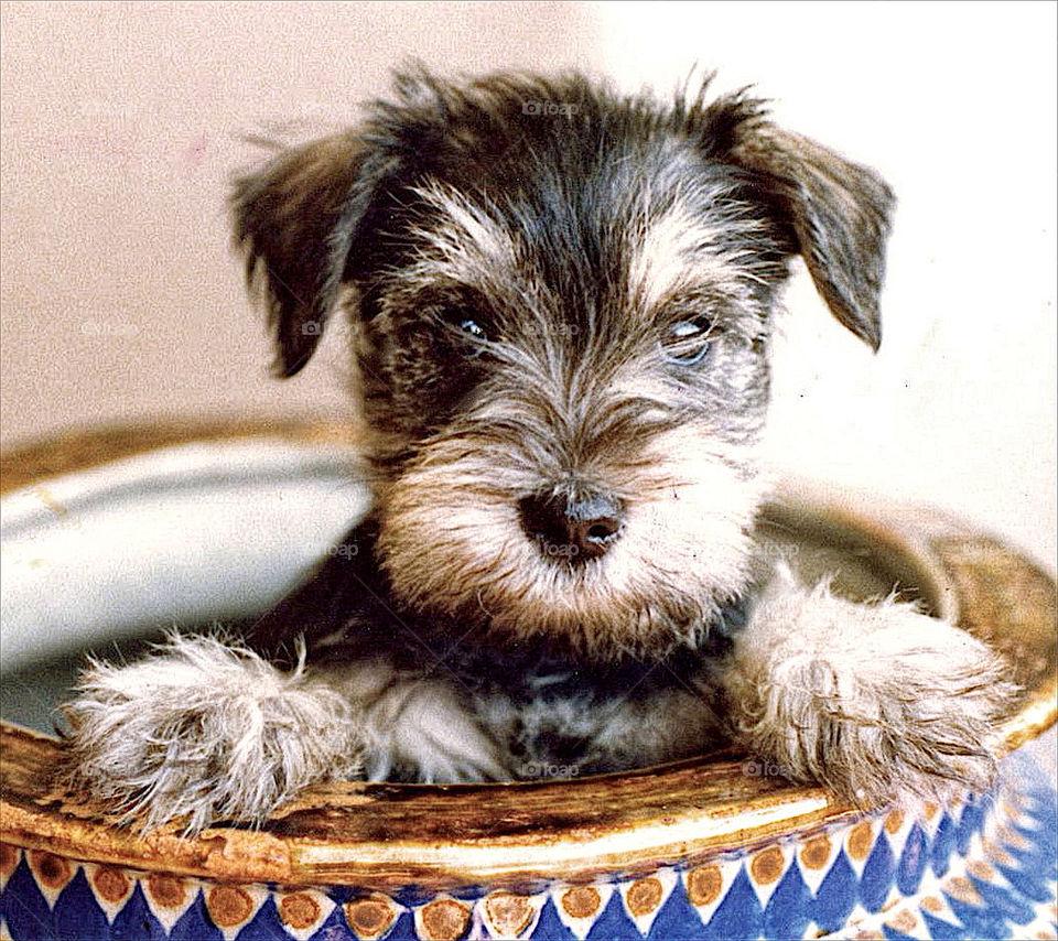 dog funny pet portrait by resnikoffdavid