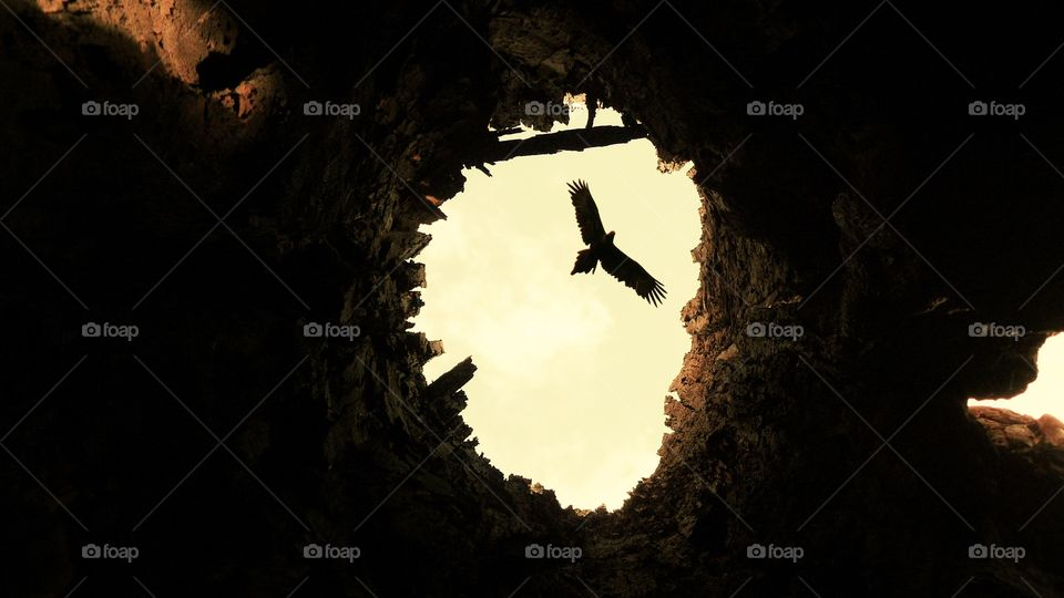 Eagle through old tree. One of my favourite shots of an eagle in sky taken from inside a hollow tree