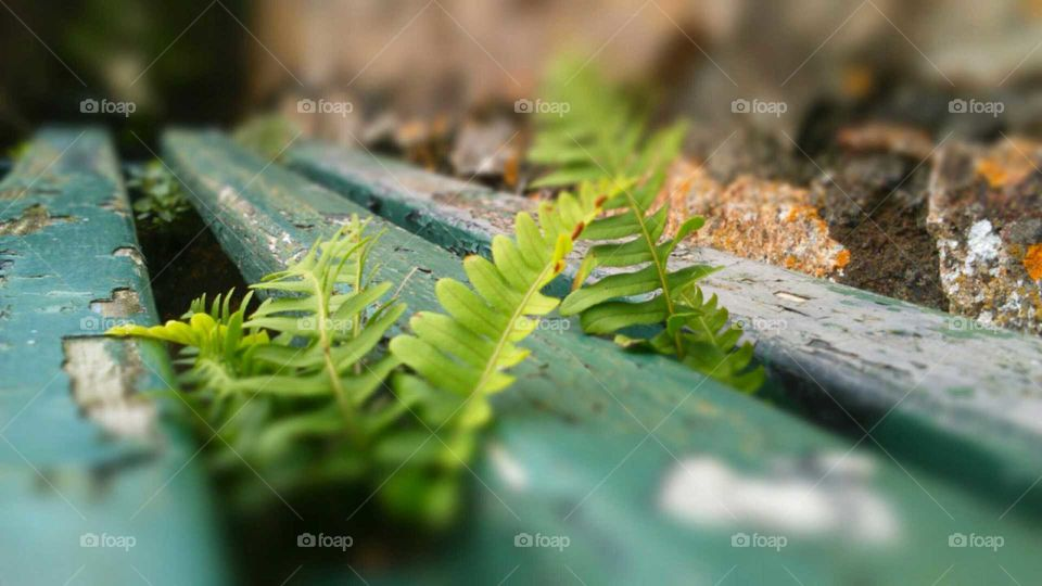 park bench over grown with fern and covered in peeling paint