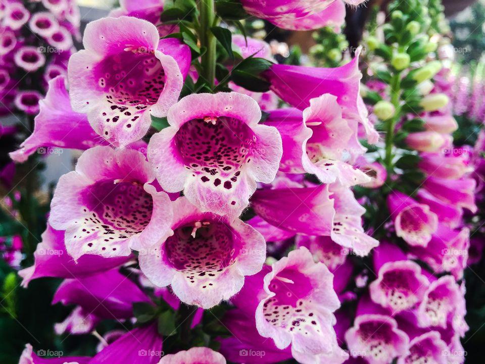 Purple flower growing on plant