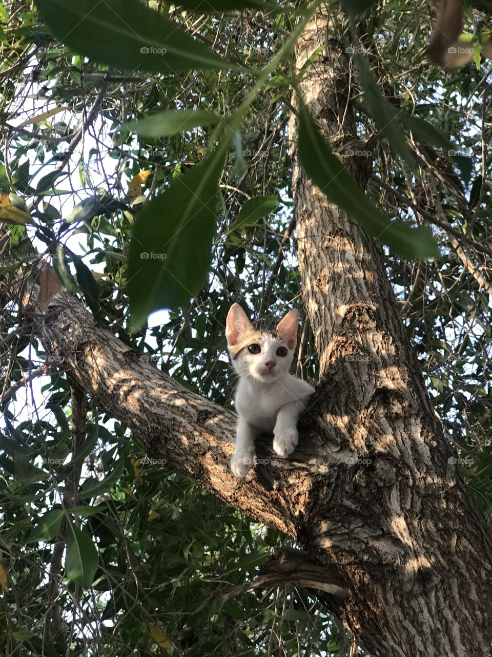 A cat chilling on tree captured at the right moment.