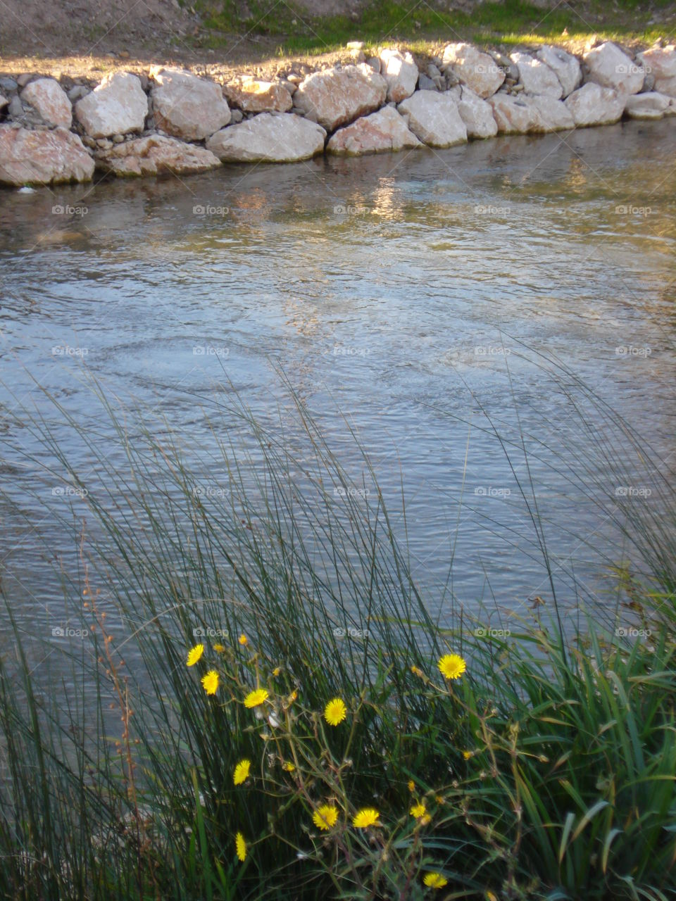 The Yellow Flowers by the River