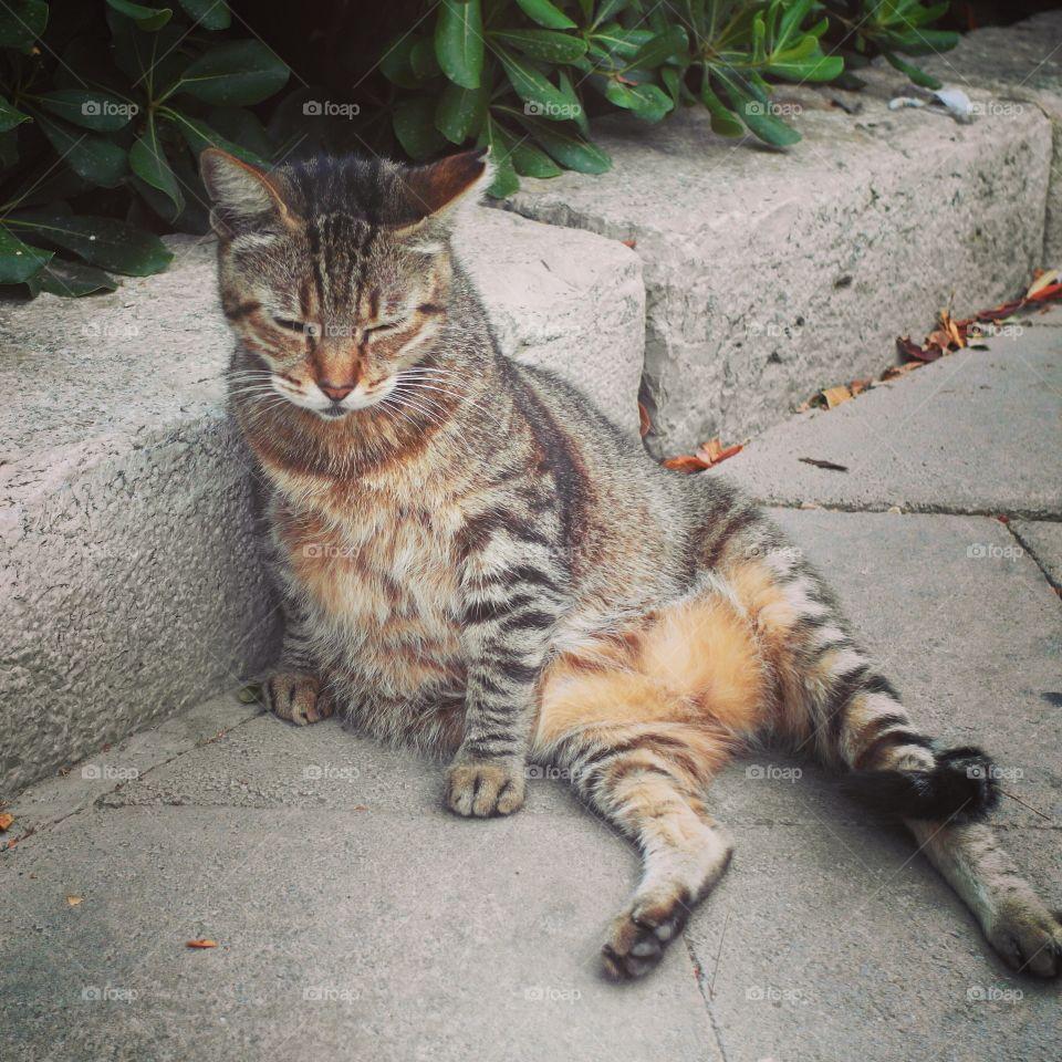 The sitting cat 😂