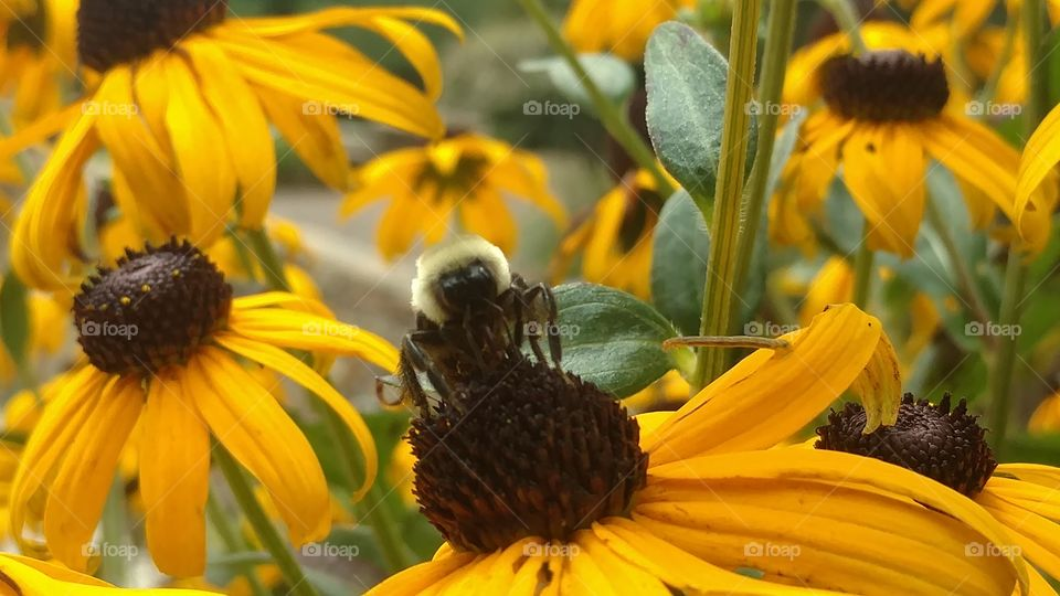 Nature, No Person, Flower, Insect, Bee