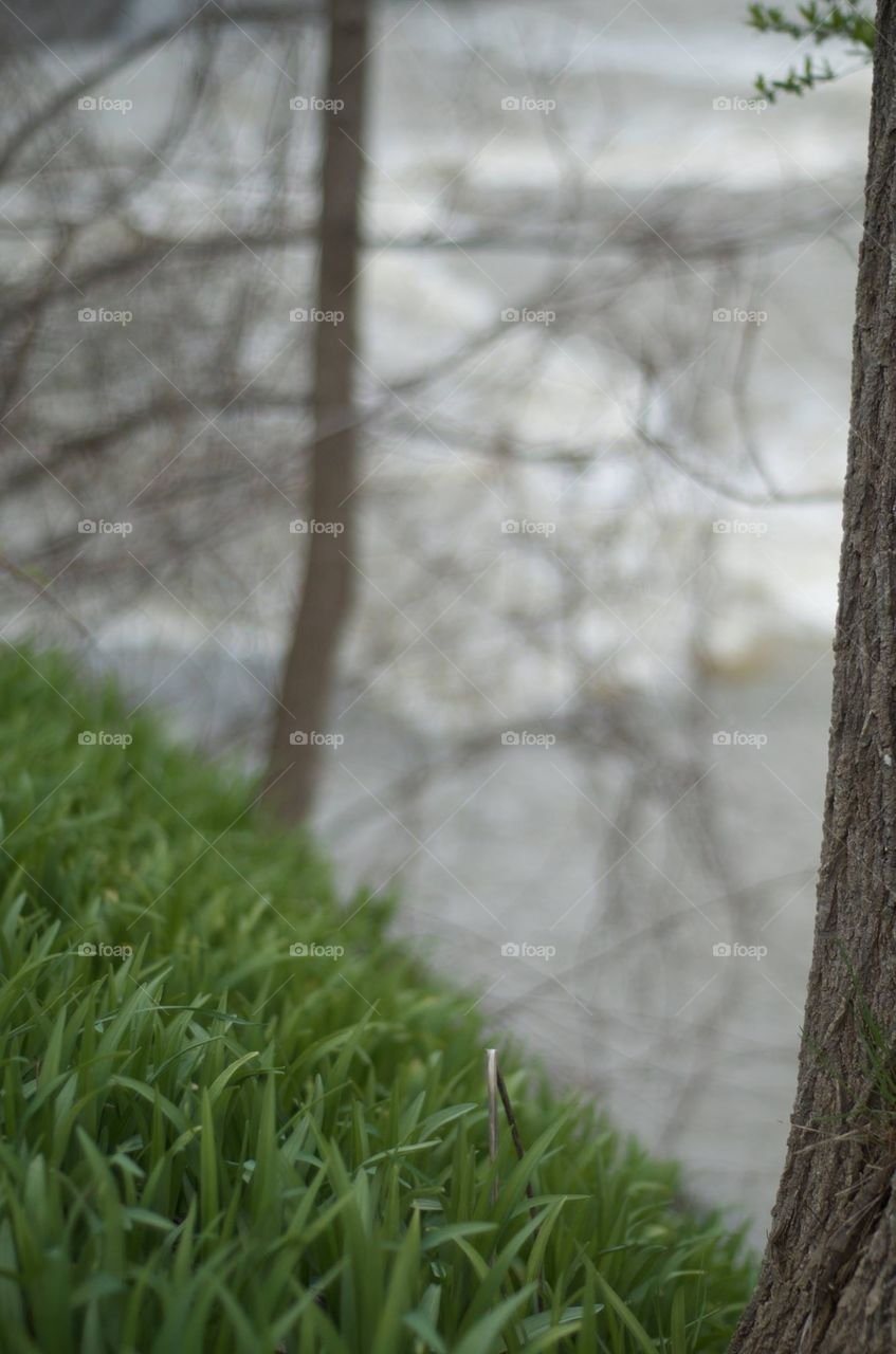 Nature, Wood, Leaf, Flora, Grass
