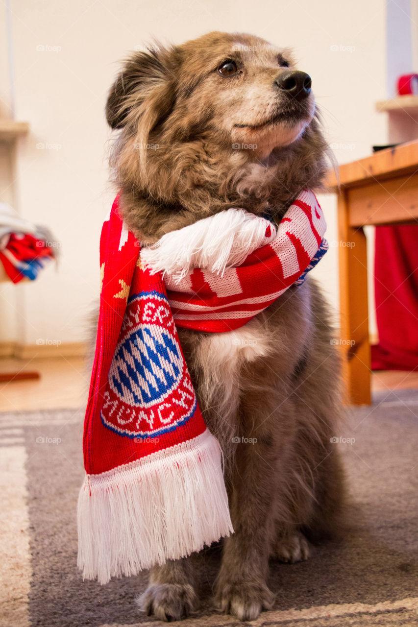 Fc bayern fan scarf