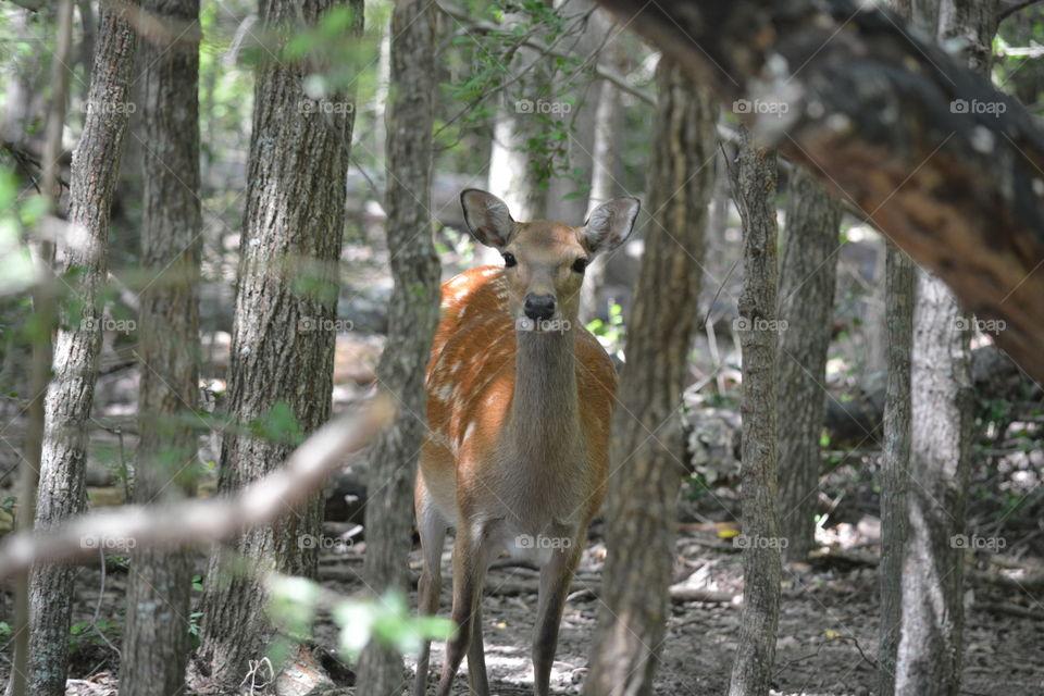Deer hiding in the woods