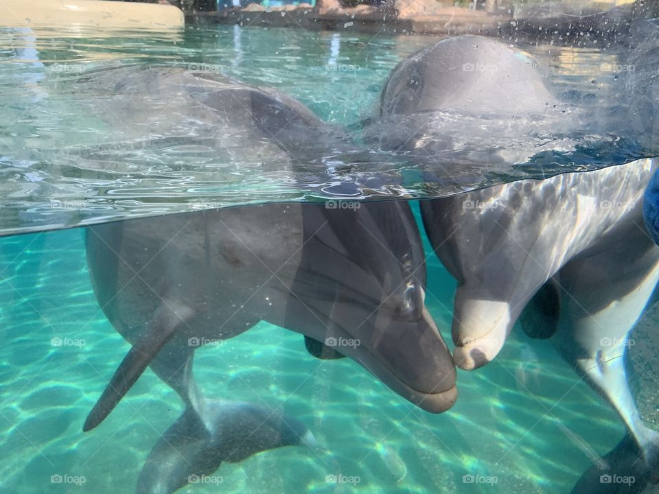 I am an Orlando Vlogger who also vlogs Seaworld Orlando and Walt Disney World every day. #day23 for Seaworld and #day174 for Disney.  Fall in love with the baby dolphins.🧡