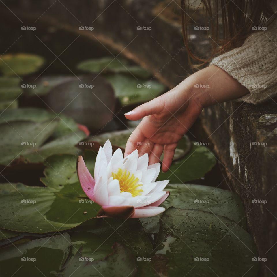 Lotus, Flower, Pool, Lily, Floating