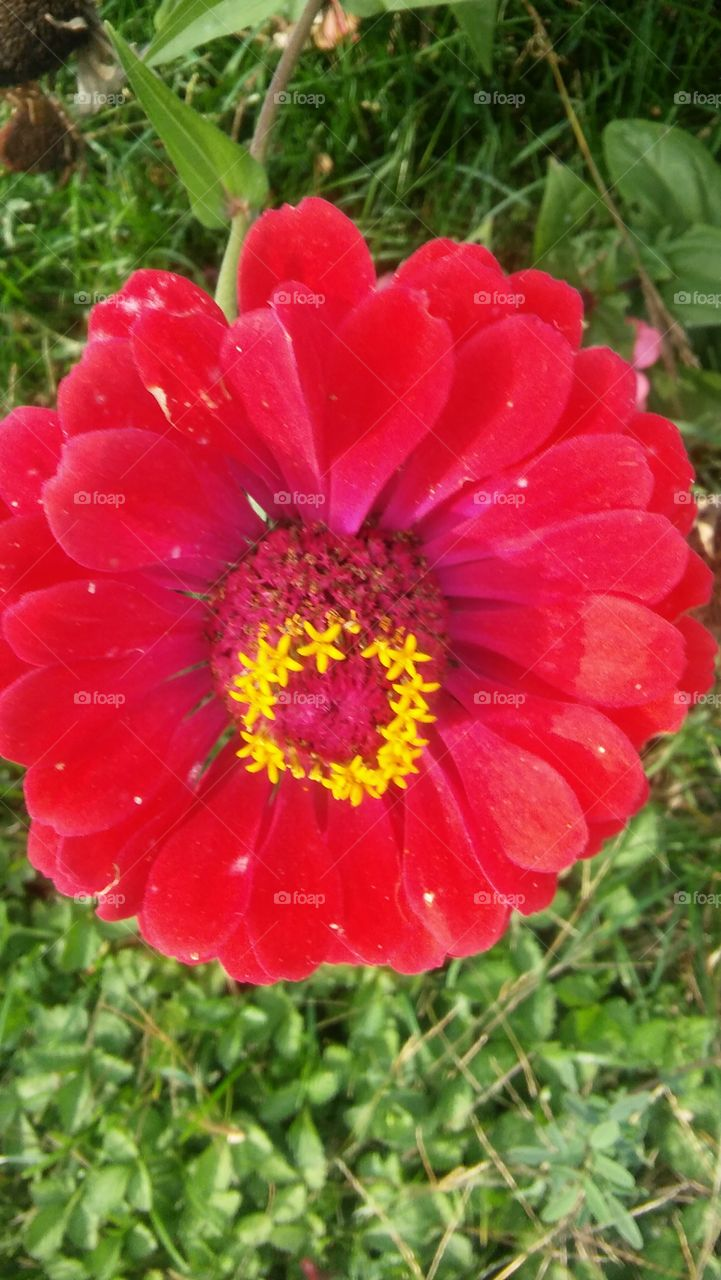 my flower from my garden before frost gets them