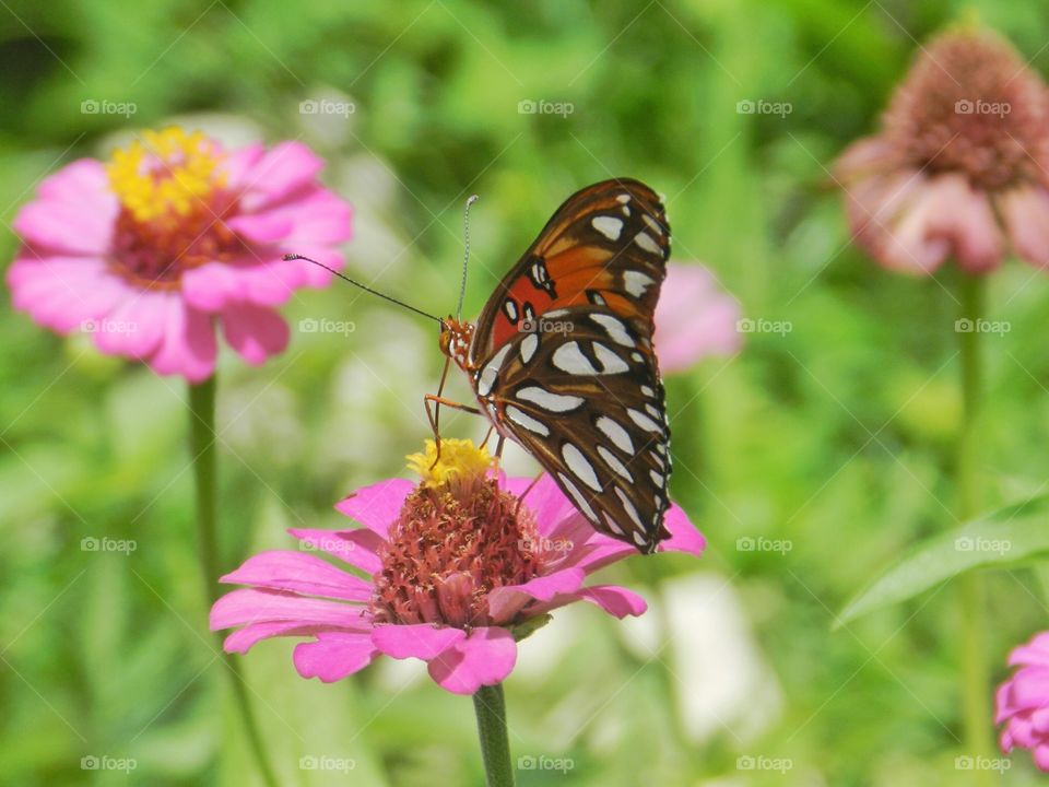 Nature, Butterfly, Summer, Flower, Insect