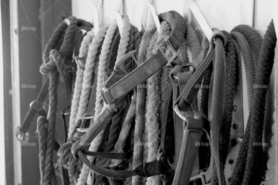 The Ropes of Riding