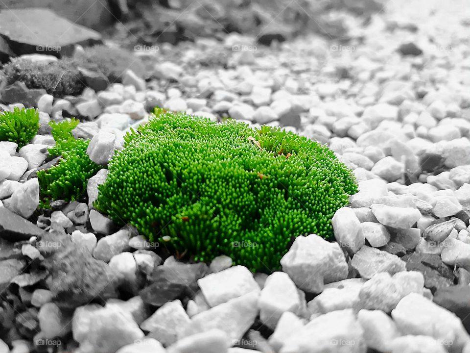 little green world