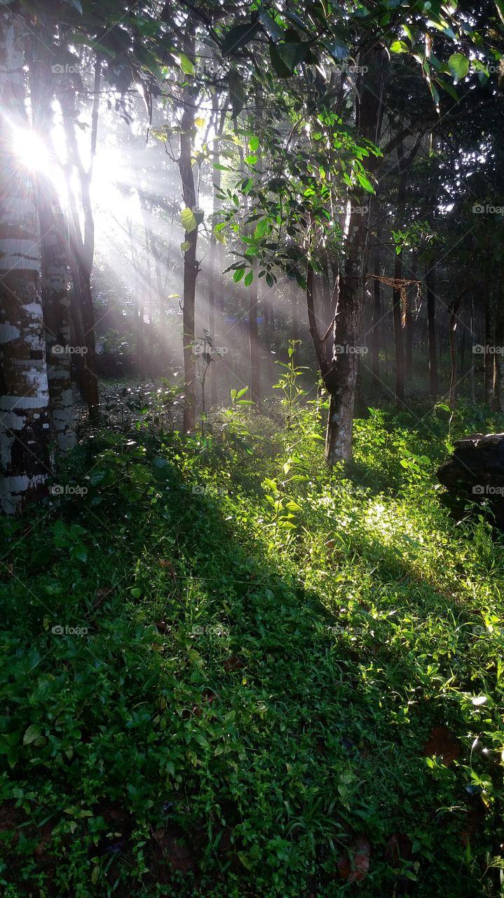 my home back yard (Kerala- Alappuzha)