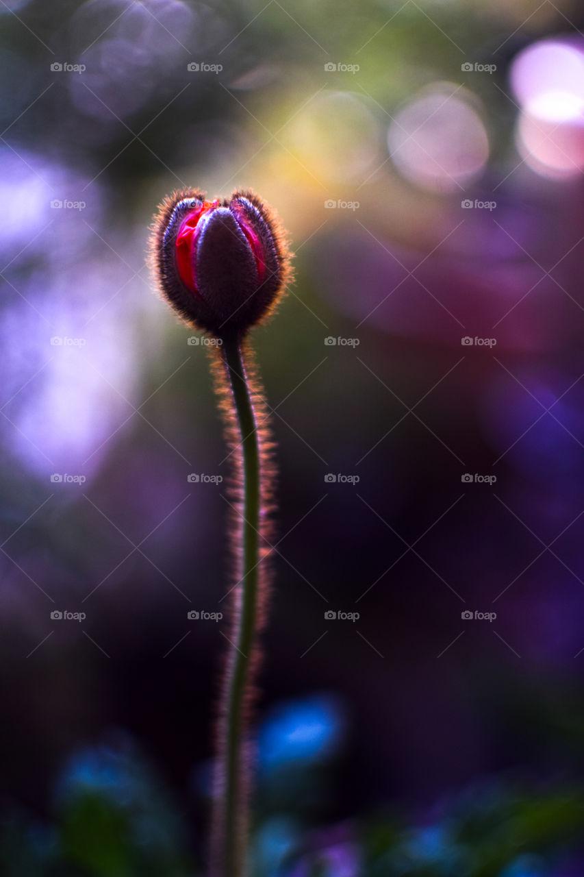 Light shining on a flower