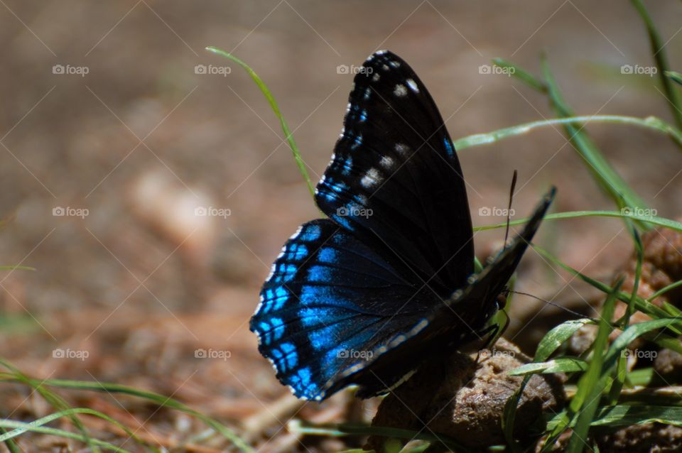 Close-up of blue butterfly