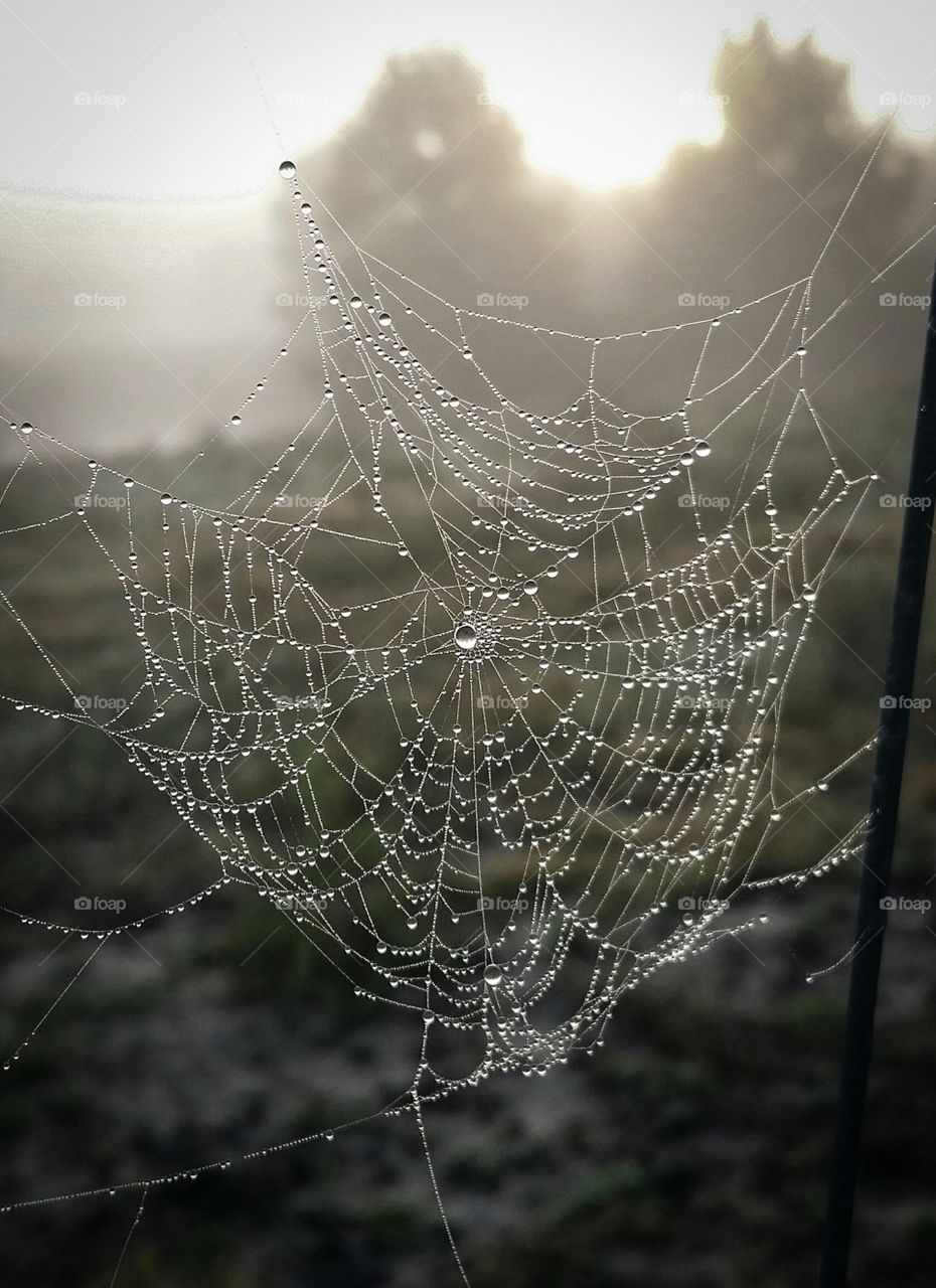 a dew covered spider web hanging on a fence in front of a winter pasture with trees in the background