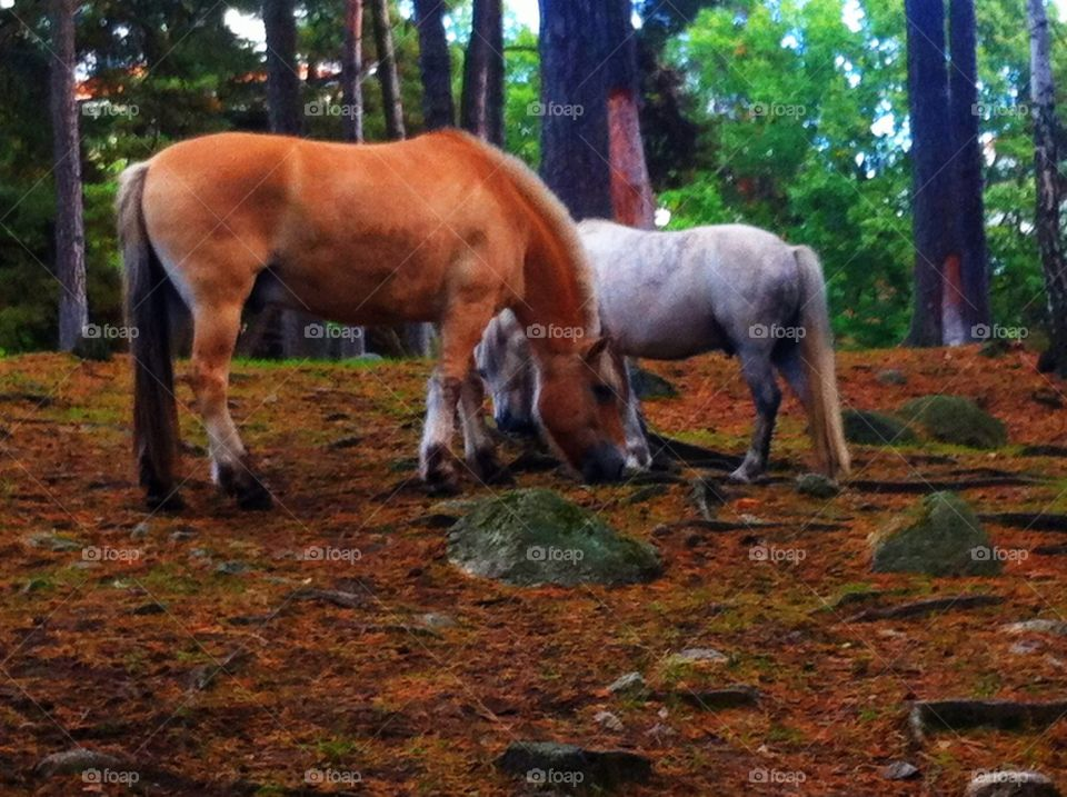 Two horses in a rural landscape.
