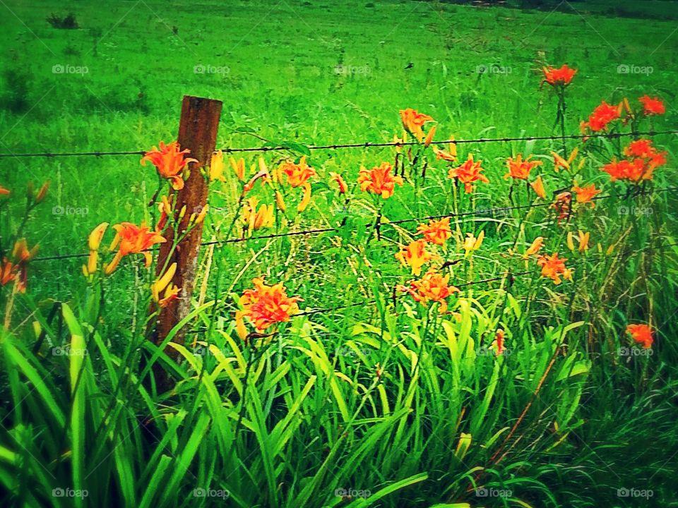 Country Roadside Flowers