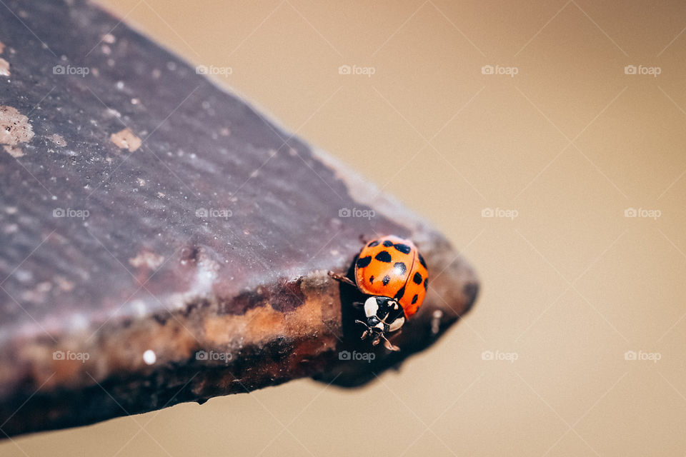 Ladybug on wooden