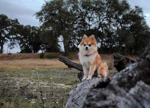 Cute dog sitting on tree trunk