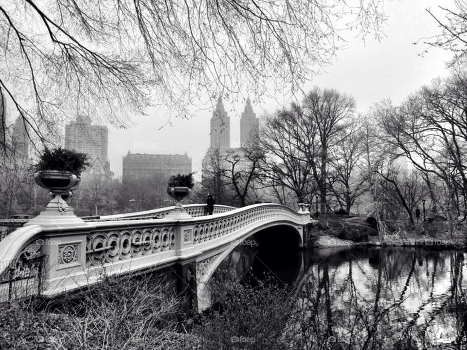 city white black trees by llotter