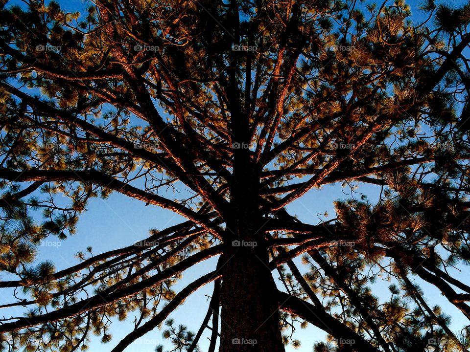 Tree at sunset light