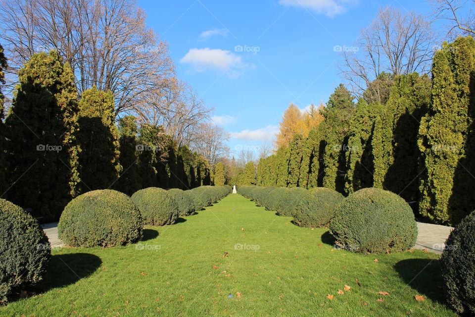 Perspective point of view of a garden with tall trees and round bushes in Autumn