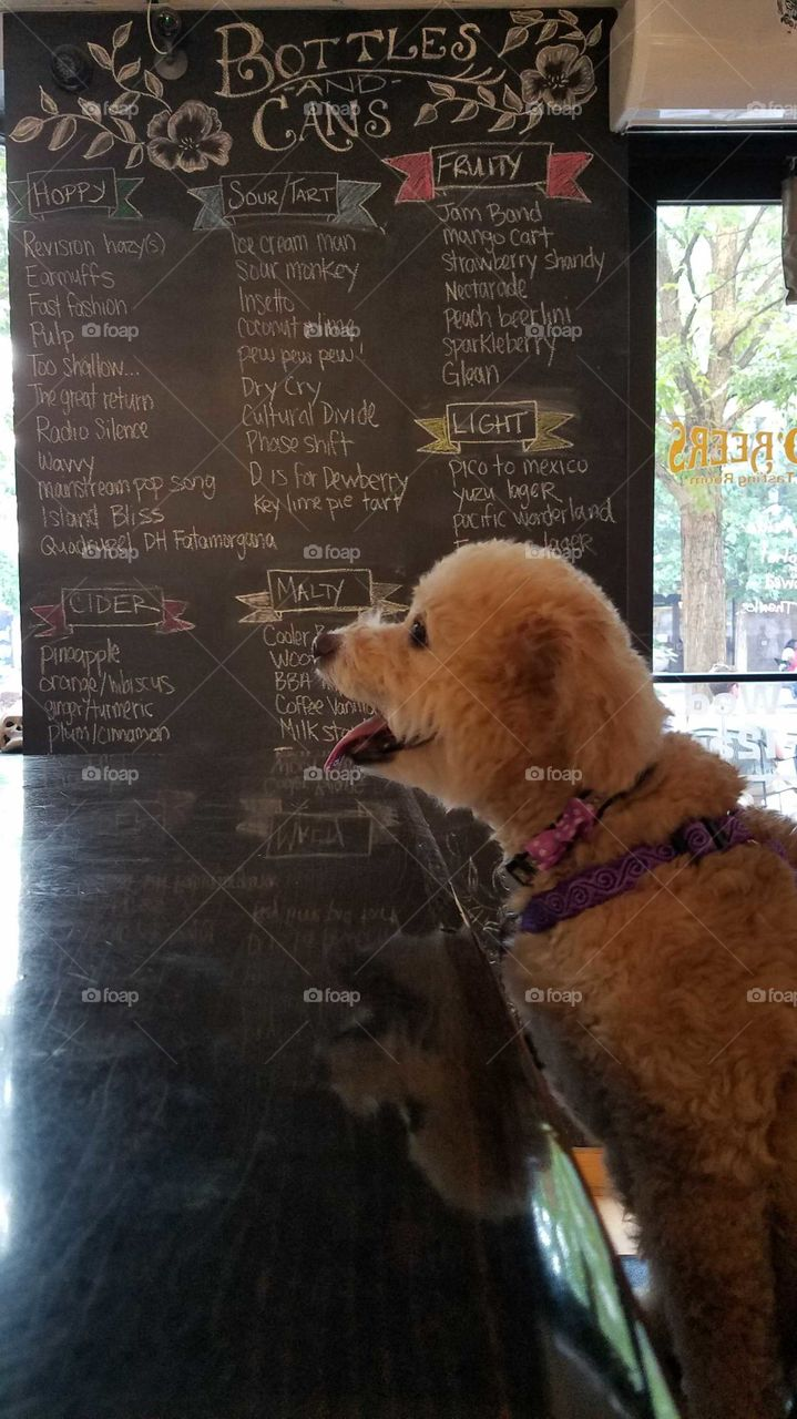 dog ordering drink at beer bar