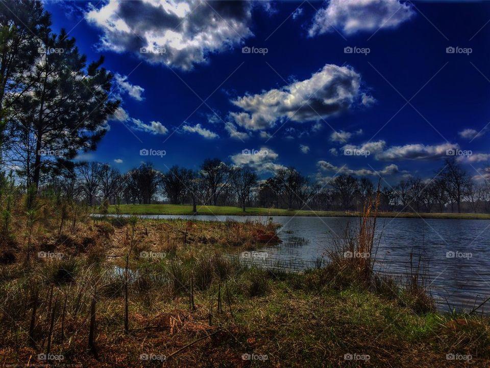 Pond Dreams
