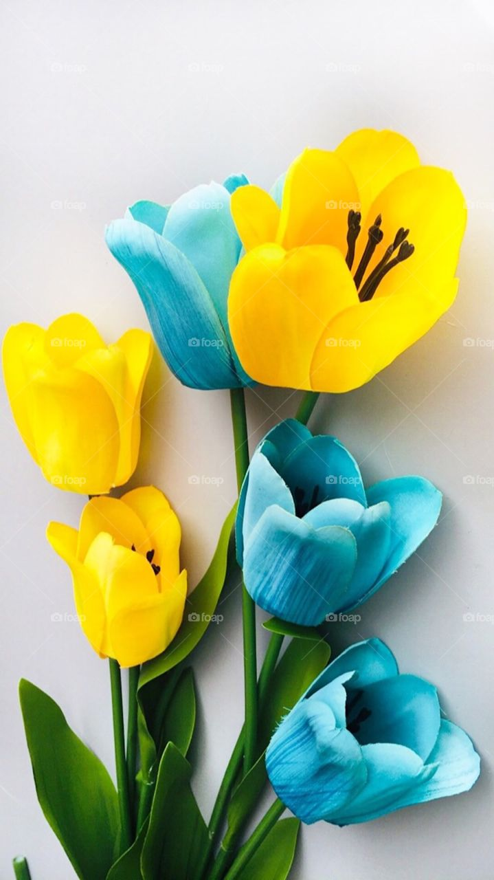Yellow and Blue Tulips, Flowers, Bouquet