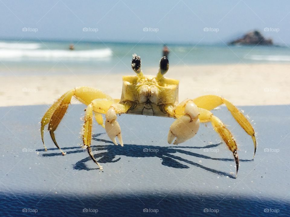 this is a photo of a crab with much detail as possible